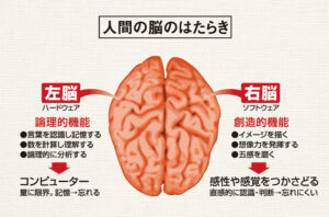 人間の脳のはたらき