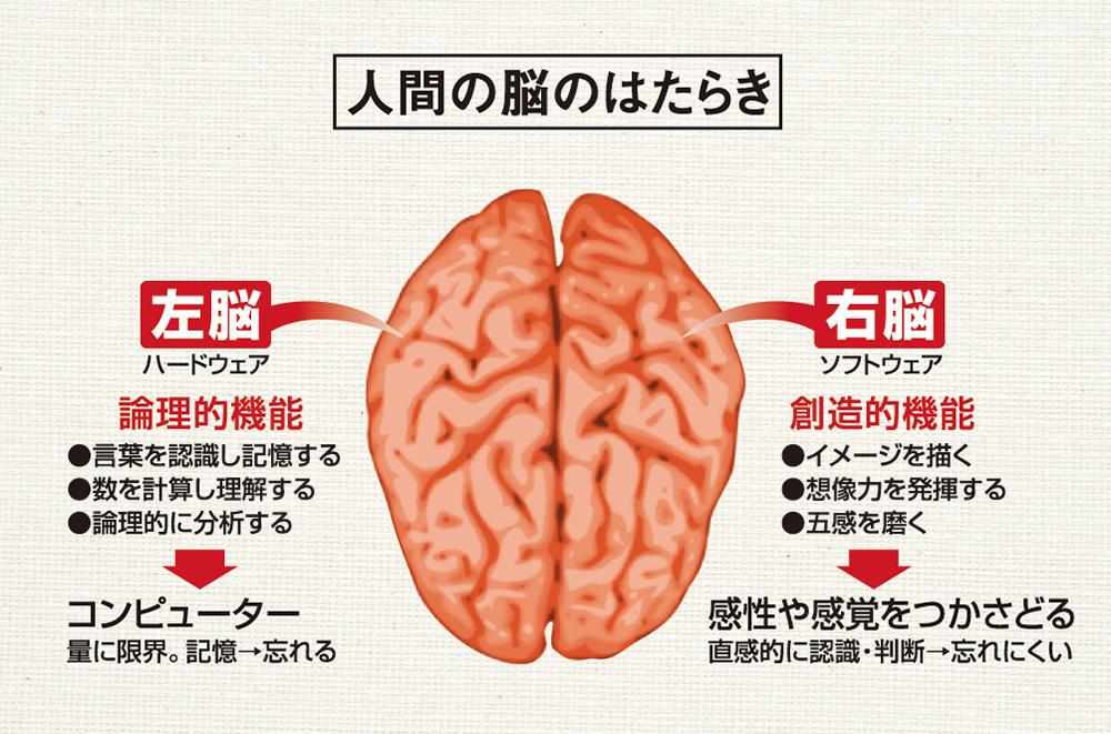 丸山景右BLOG 人間の脳のはたらき